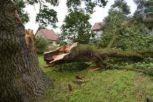 chute d'arbre ou de branches d'arbre sur la voiture
